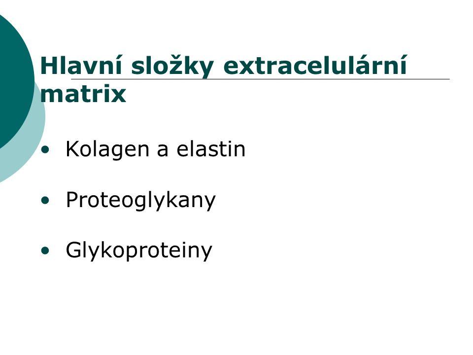 Hlavní složky extracelulární matrix Kolagen a elastin Proteoglykany Glykoproteiny