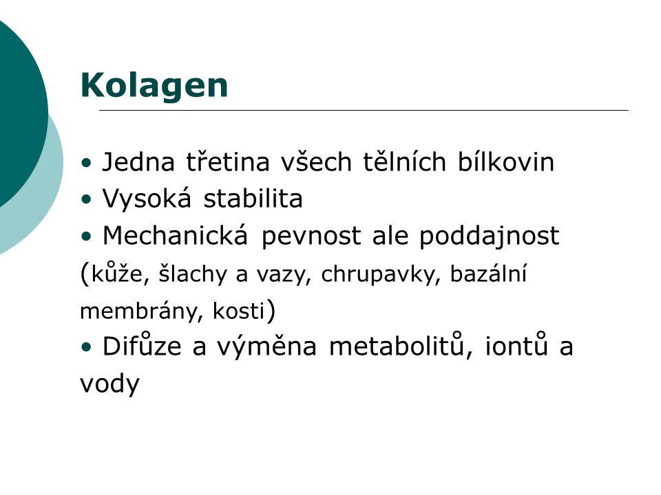 Kolagen Jedna třetina všech tělních bílkovin Vysoká stabilita Mechanická pevnost ale poddajnost ( kůže, šlachy a vazy, chrupavky, bazální membrány, kosti ) Difůze a výměna metabolitů, iontů a vody