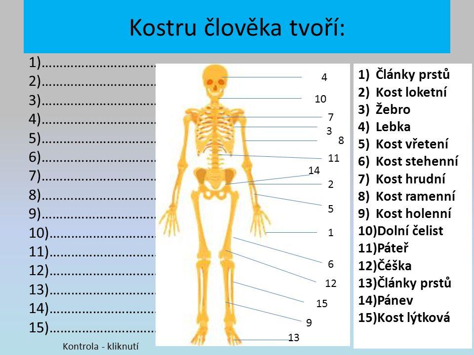 Kostru člověka tvoří: 1)…………………………….. 2)……………………………..