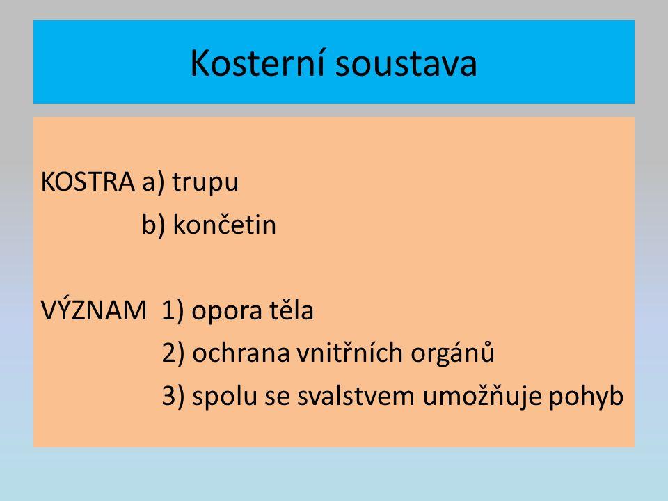 Kosterní soustava KOSTRA a) trupu b) končetin VÝZNAM 1) opora těla 2) ochrana vnitřních orgánů 3) spolu se svalstvem umožňuje pohyb