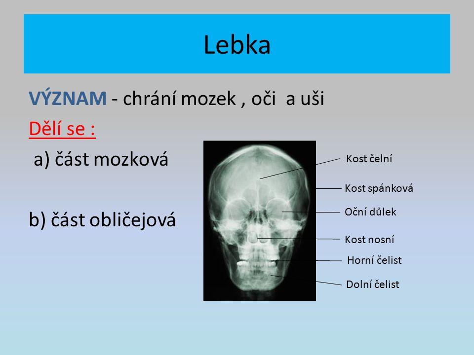 Lebka VÝZNAM - chrání mozek, oči a uši Dělí se : a) část mozková b) část obličejová Kost čelní Kost spánková Oční důlek Kost nosní Horní čelist Dolní čelist