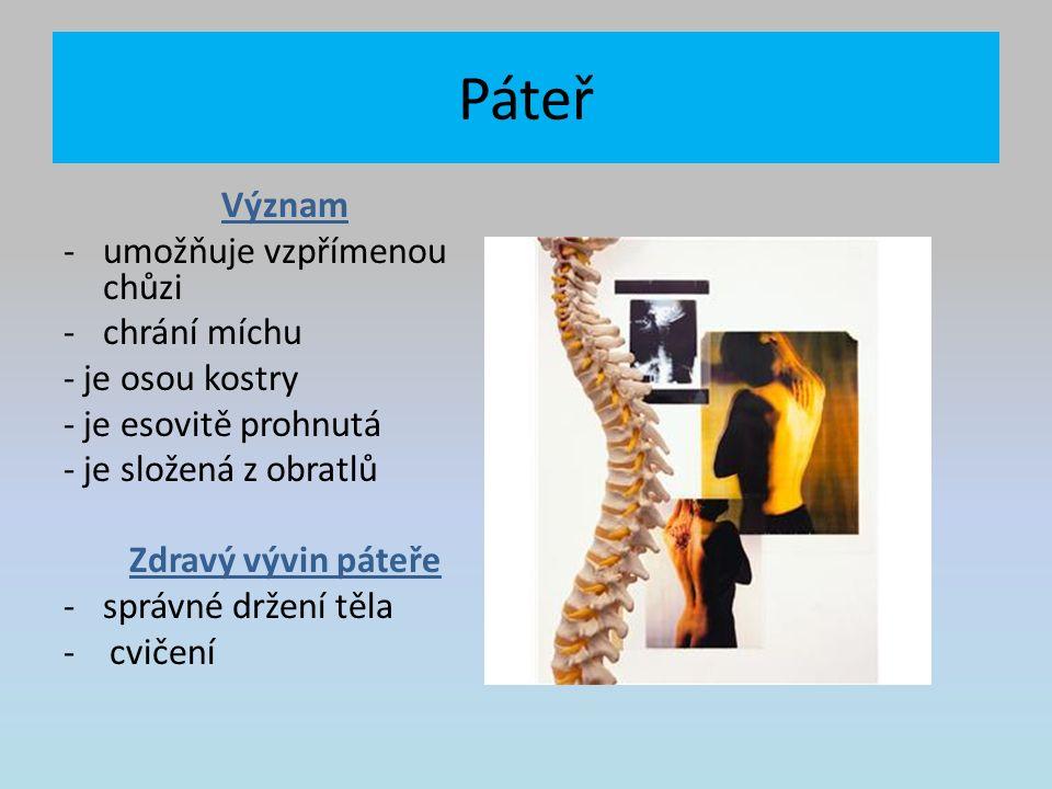 Páteř Význam -umožňuje vzpřímenou chůzi -chrání míchu - je osou kostry - je esovitě prohnutá - je složená z obratlů Zdravý vývin páteře -správné držení těla - cvičení