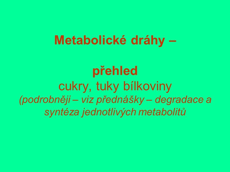 Metabolické dráhy – přehled cukry, tuky bílkoviny (podrobněji – viz přednášky – degradace a syntéza jednotlivých metabolitů
