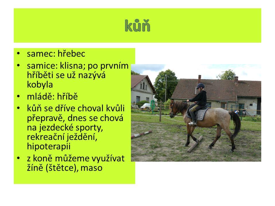 samec: hřebec samice: klisna; po prvním hříběti se už nazývá kobyla mládě: hříbě kůň se dříve choval kvůli přepravě, dnes se chová na jezdecké sporty,