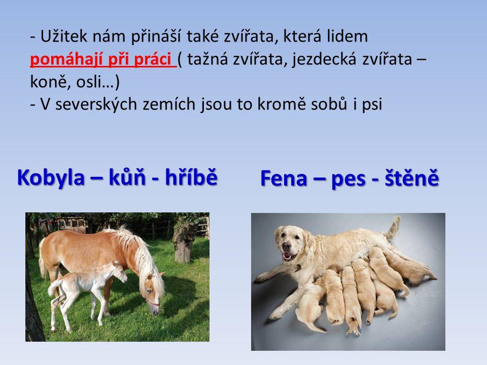 Fena – pes - štěně Kobyla – kůň - hříbě - Užitek nám přináší také zvířata, která lidem pomáhají při práci ( tažná zvířata, jezdecká zvířata – koně, osli…) - V severských zemích jsou to kromě sobů i psi