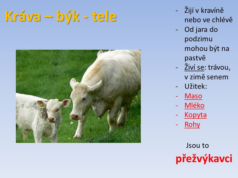 Kráva – býk - tele -Žijí v kravíně nebo ve chlévě -Od jara do podzimu mohou být na pastvě -Živí se: trávou, v zimě senem -Užitek: -Maso -Mléko -Kopyta -Rohy Jsou to přežvýkavci