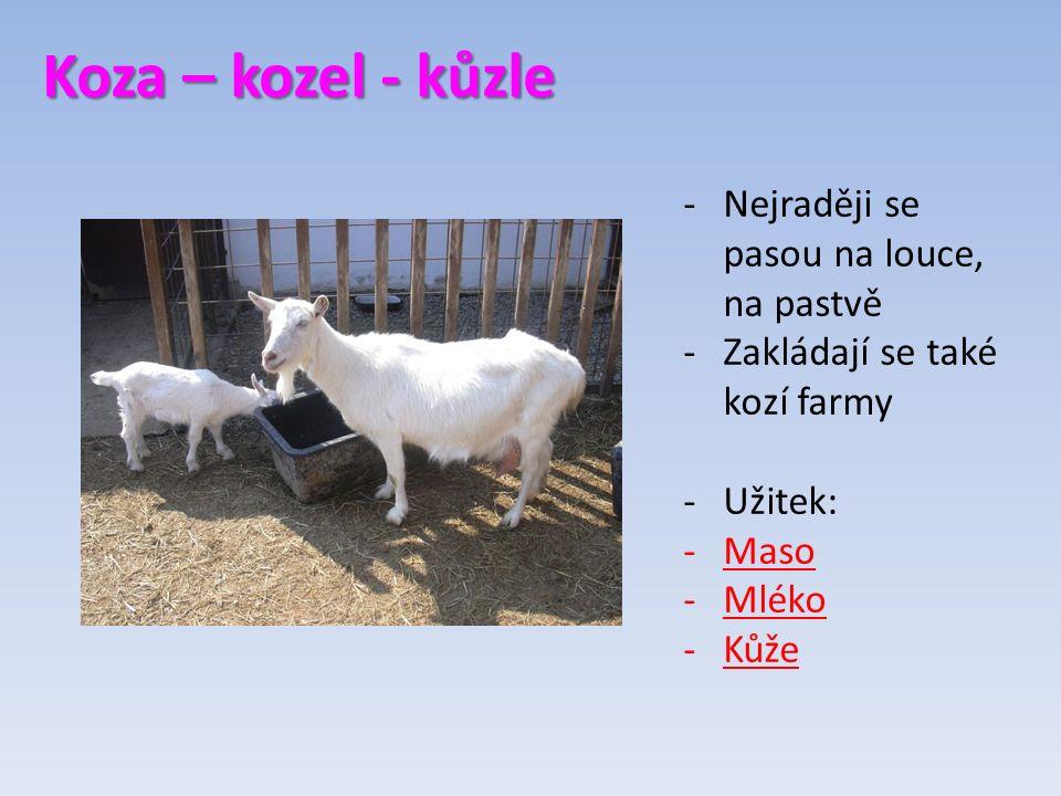 Koza – kozel - kůzle -Nejraději se pasou na louce, na pastvě -Zakládají se také kozí farmy -Užitek: -Maso -Mléko -Kůže