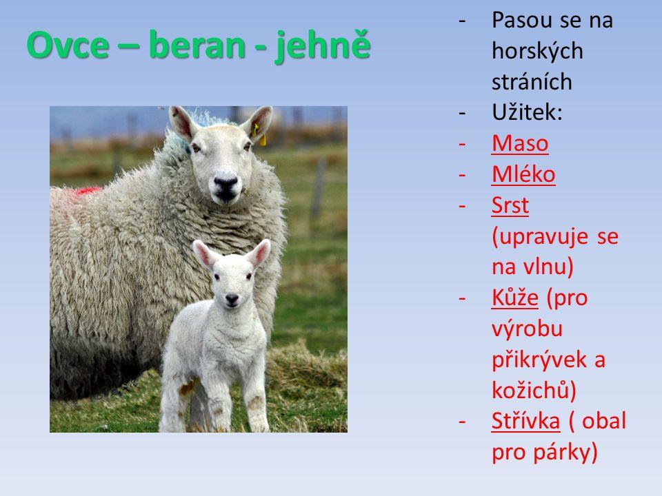 Ovce – beran - jehně -Pasou se na horských stráních -Užitek: -Maso -Mléko -Srst (upravuje se na vlnu) -Kůže (pro výrobu přikrývek a kožichů) -Střívka ( obal pro párky)
