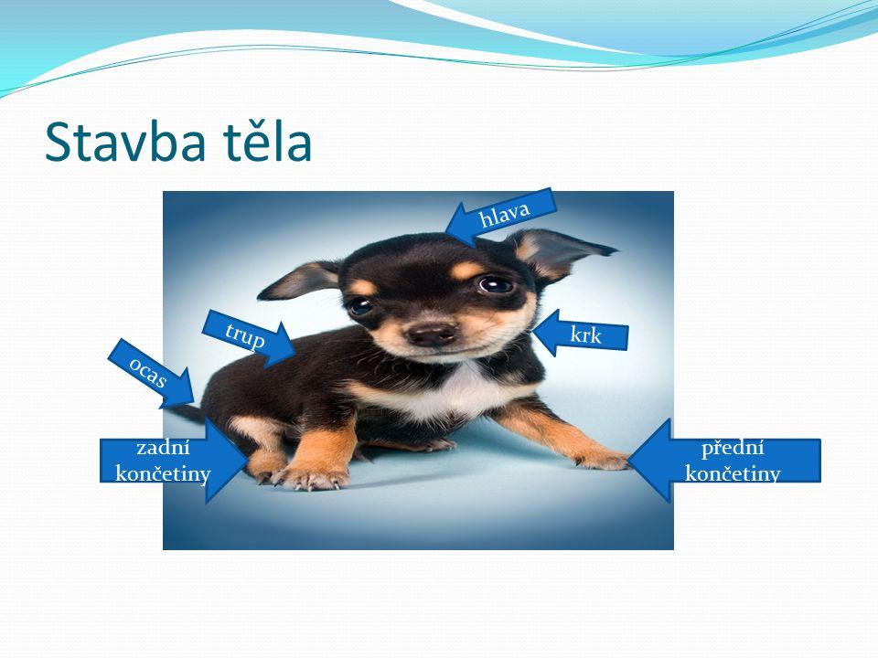 Plemena psů http://cs.wikipedia.org/wiki/Ps%C3%AD_plemena