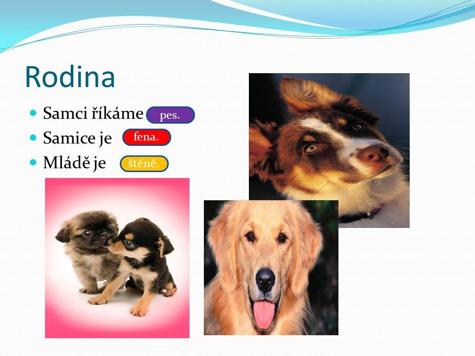 Rodina Samci říkáme Samice je Mládě je pes. fena. štěně.
