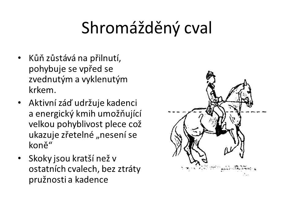 Shromážděný cval Kůň zůstává na přilnutí, pohybuje se vpřed se zvednutým a vyklenutým krkem.
