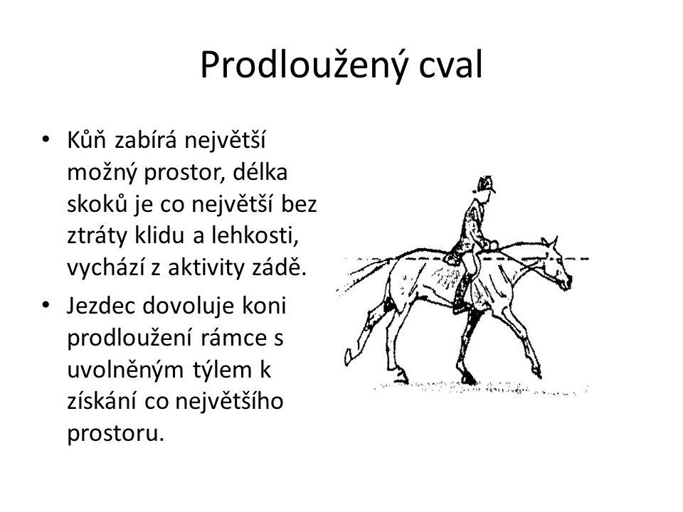 Prodloužený cval Kůň zabírá největší možný prostor, délka skoků je co největší bez ztráty klidu a lehkosti, vychází z aktivity zádě.