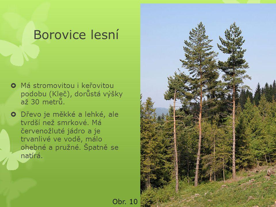 Borovice lesní  Má stromovitou i keřovitou podobu (Kleč), dorůstá výšky až 30 metrů.  Dřevo je měkké a lehké, ale tvrdší než smrkové. Má červenožlut