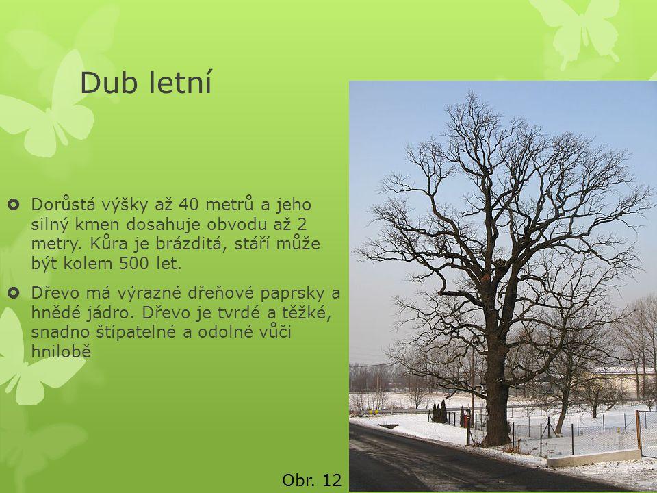 Dub letní  Dorůstá výšky až 40 metrů a jeho silný kmen dosahuje obvodu až 2 metry. Kůra je brázditá, stáří může být kolem 500 let.  Dřevo má výrazné