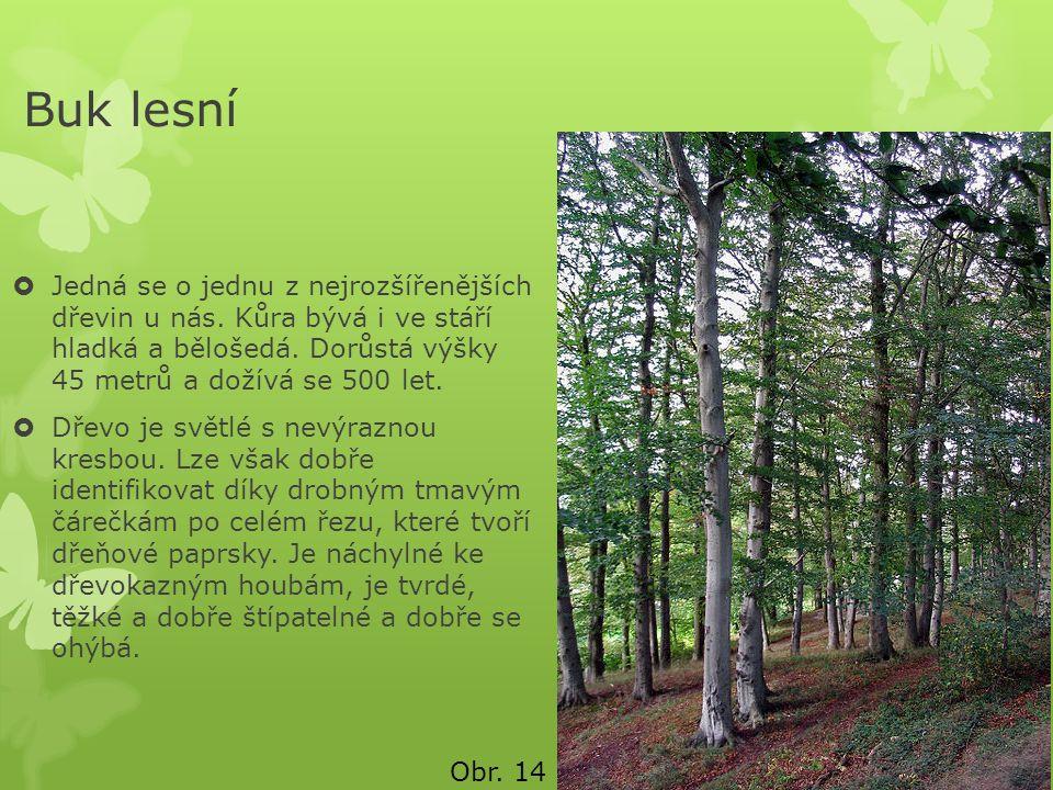 Buk lesní  Jedná se o jednu z nejrozšířenějších dřevin u nás. Kůra bývá i ve stáří hladká a bělošedá. Dorůstá výšky 45 metrů a dožívá se 500 let.  D