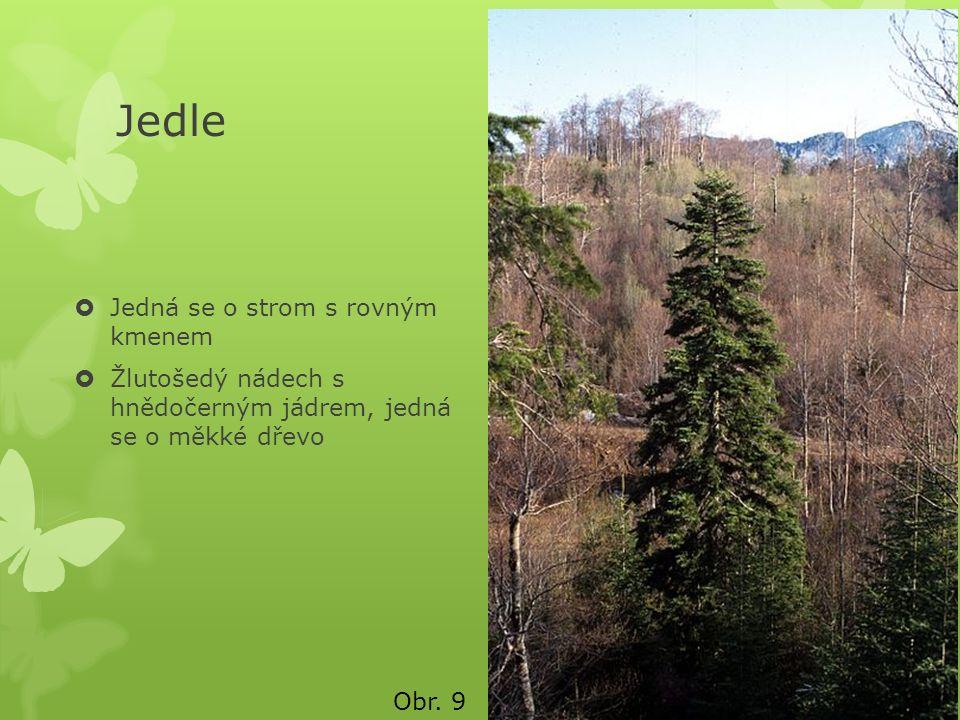 Jedle  Jedná se o strom s rovným kmenem  Žlutošedý nádech s hnědočerným jádrem, jedná se o měkké dřevo Obr. 9