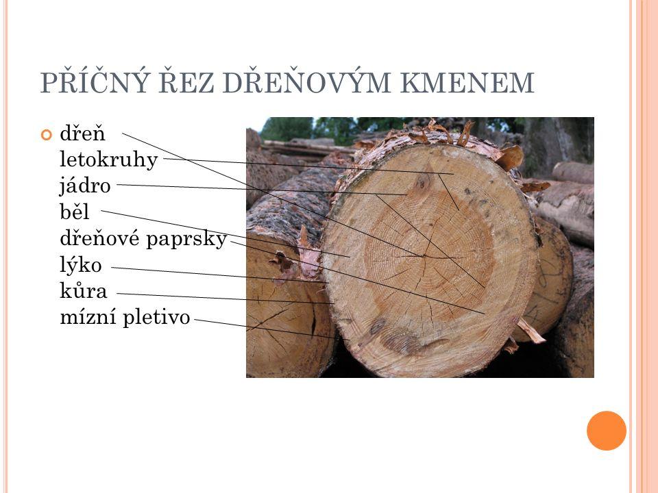 PŘÍČNÝ ŘEZ DŘEŇOVÝM KMENEM dřeň letokruhy jádro běl dřeňové paprsky lýko kůra mízní pletivo