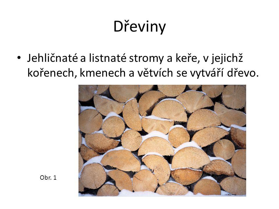 Dřeviny Jehličnaté a listnaté stromy a keře, v jejichž kořenech, kmenech a větvích se vytváří dřevo.