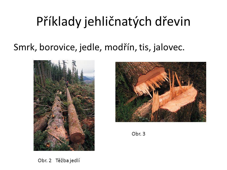 Příklady jehličnatých dřevin Smrk, borovice, jedle, modřín, tis, jalovec. Obr. 2 Těžba jedlí Obr. 3