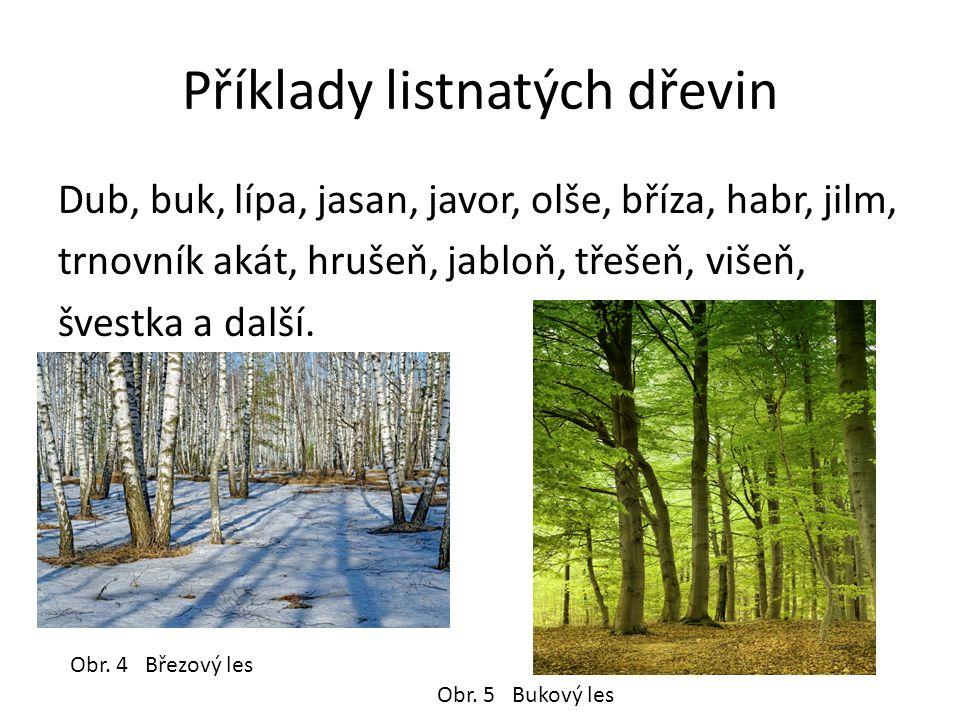 Příklady listnatých dřevin Dub, buk, lípa, jasan, javor, olše, bříza, habr, jilm, trnovník akát, hrušeň, jabloň, třešeň, višeň, švestka a další.