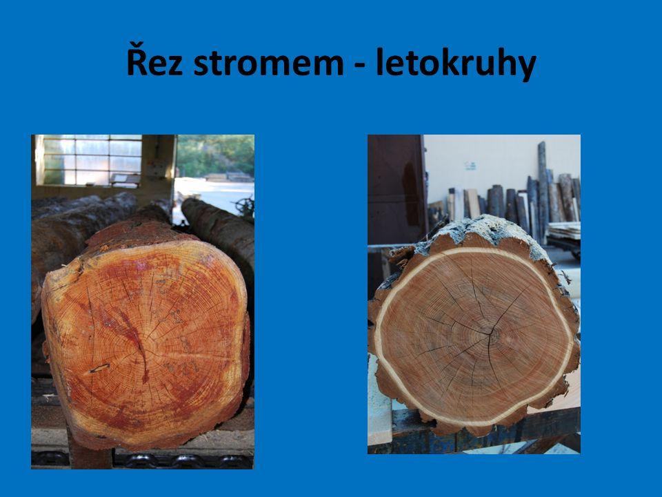 Řez stromem - letokruhy