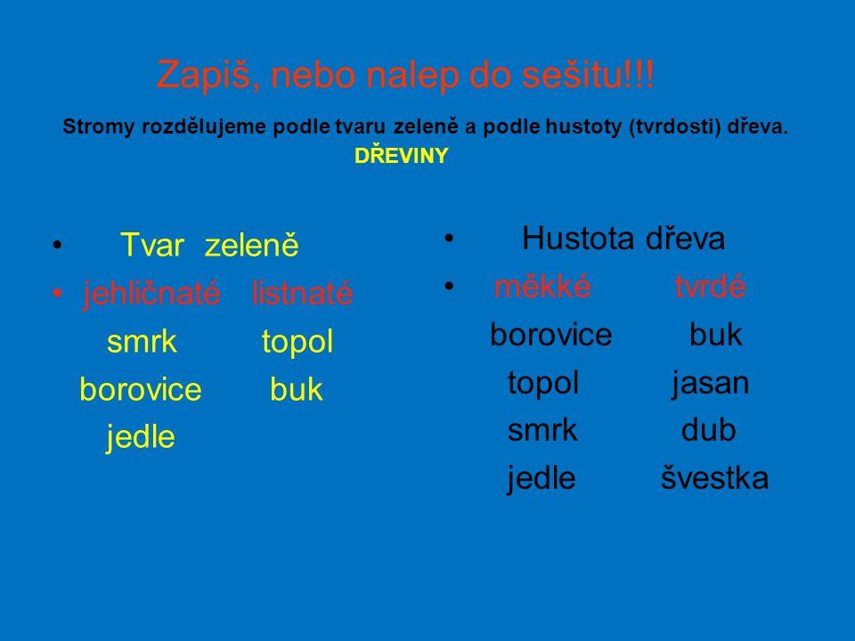 """""""SEKVOJ Olivovník v Chorvatsku"""