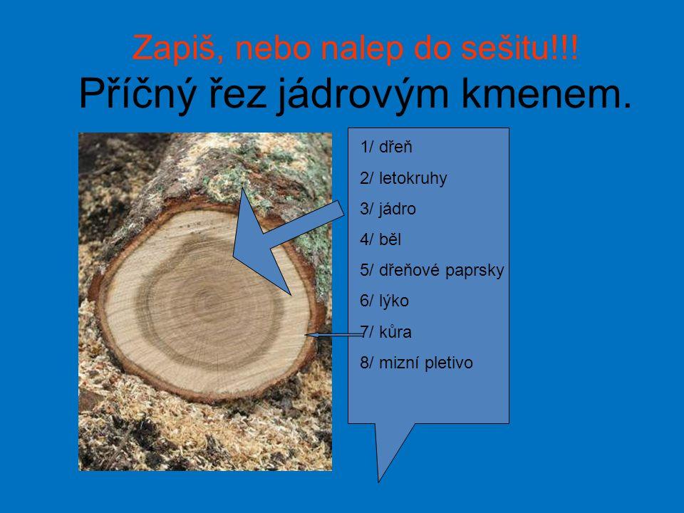 Letokruhy Letokruhy – stáři stromu 25 let Letokruhy, praskání nevysušeného dřeva