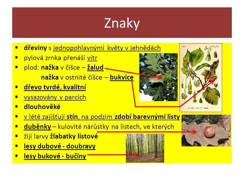 Znaky  dřeviny s jednopohlavnými květy v jehnědách  pylová zrnka přenáší vítr  plod: nažka v číšce – žalud nažka v ostnité číšce – bukvice  dřevo tvrdé, kvalitní  vysazovány v parcích  dlouhověké  v létě zajišťují stín, na podzim zdobí barevnými listy  duběnky – kulovité nárůstky na listech, ve kterých  žijí larvy žlabatky listové  lesy dubové - doubravy  lesy bukové - bučiny