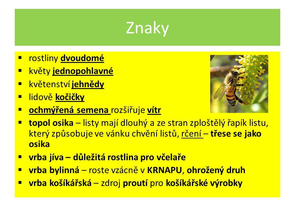 Znaky  rostliny dvoudomé  květy jednopohlavné  květenství jehnědy  lidově kočičky  ochmýřená semena rozšiřuje vítr  topol osika – listy mají dlouhý a ze stran zploštělý řapík listu, který způsobuje ve vánku chvění listů, rčení – třese se jako osika  vrba jíva – důležitá rostlina pro včelaře  vrba bylinná – roste vzácně v KRNAPU, ohrožený druh  vrba košíkářská – zdroj proutí pro košíkářské výrobky