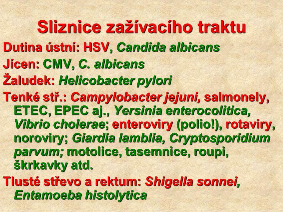 Sliznice zažívacího traktu Dutina ústní: HSV, Candida albicans Jícen: CMV, C. albicans Žaludek: Helicobacter pylori Tenké stř.: Campylobacter jejuni,