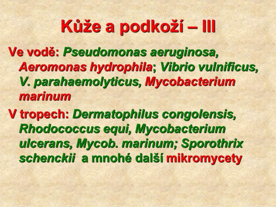 Kůže a podkoží – III Ve vodě: Pseudomonas aeruginosa, Aeromonas hydrophila; Vibrio vulnificus, V.