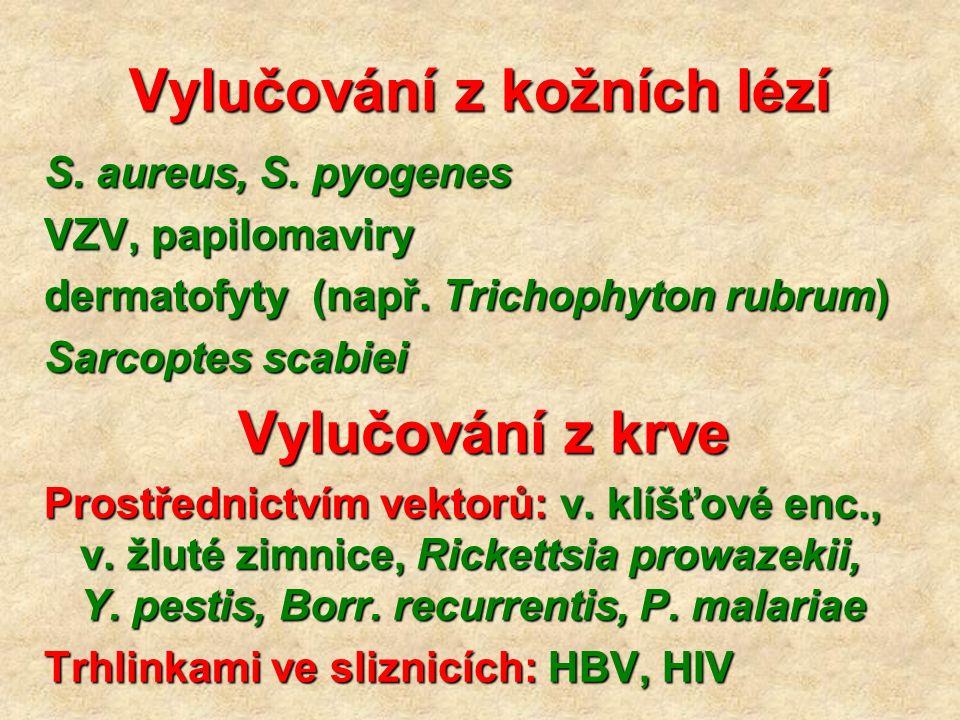 Vylučování z kožních lézí S. aureus, S. pyogenes VZV, papilomaviry dermatofyty (např. Trichophyton rubrum) Sarcoptes scabiei Vylučování z krve Prostře