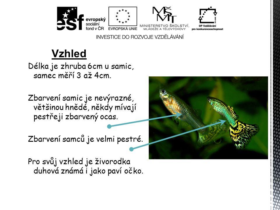 Délka je zhruba 6cm u samic, samec měří 3 až 4cm. Zbarvení samic je nevýrazné, většinou hnědé, někdy mívají pestřeji zbarvený ocas. Zbarvení samců je
