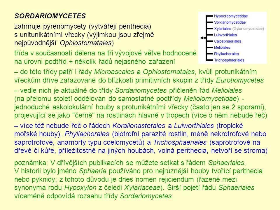 SORDARIOMYCETES zahrnuje pyrenomycety (vytvářejí perithecia) s unitunikátními vřecky (výjimkou jsou zřejmě nejpůvodnější Ophiostomatales) třída v současnosti dělena na tři vývojové větve hodnocené na úrovni podtříd + několik řádů nejasného zařazení – do této třídy patří i řády Microascales a Ophiostomatales, kvůli protunikátním vřeckům dříve zařazované do blízkosti primitivních skupin z třídy Eurotiomycetes – vedle nich je aktuálně do třídy Sordariomycetes přičleněn řád Meliolales (na přelomu století oddělován do samostatné podtřídy Meliolomycetidae) - jednoduché askolokulární houby s protunikátními vřecky (často jen se 2 sporami), projevující se jako černě na rostlinách hlavně v tropech (více o něm nebude řeč) – více též nebude řeč o řádech Koralionastetales a Lulworthiales (tropické mořské houby), Phyllachorales (biotrofní parazité rostlin, méně nekrotrofové nebo saprotrofové, anamorfy typu coelomycetů) a Trichosphaeriales (saprotrofové na dřevě či kůře, příležitostně na jiných houbách, volná perithecia, netvoří se stroma) poznámka: V dřívějších publikacích se můžete setkat s řádem Sphaeriales.