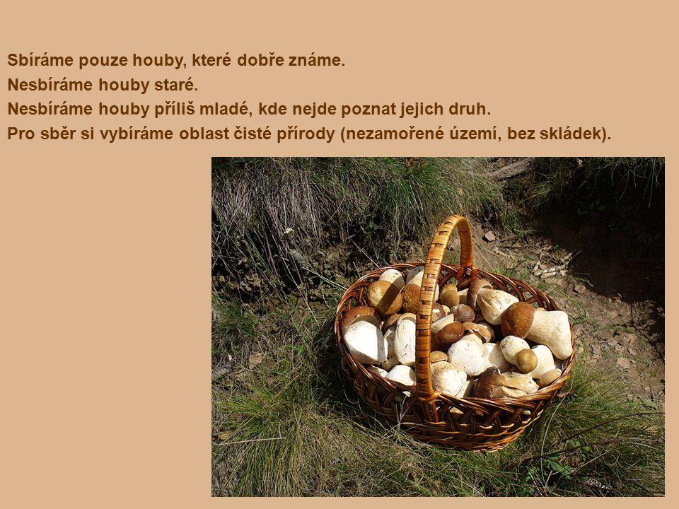 Příklad jedlé houby Hřib smrkový