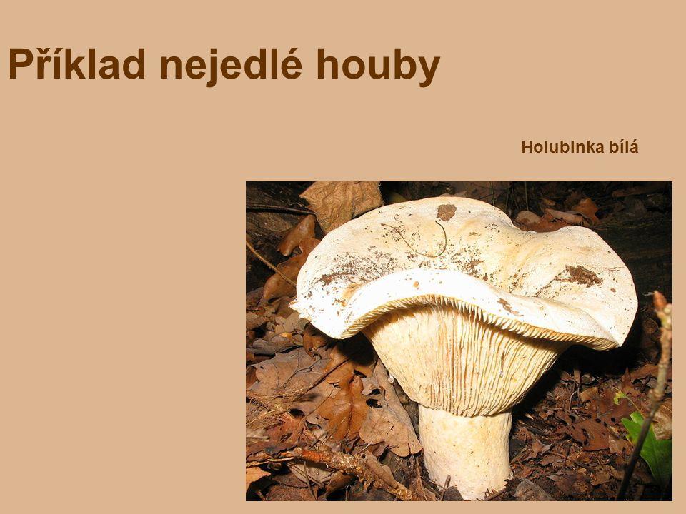 Příklad nejedlé houby Holubinka bílá