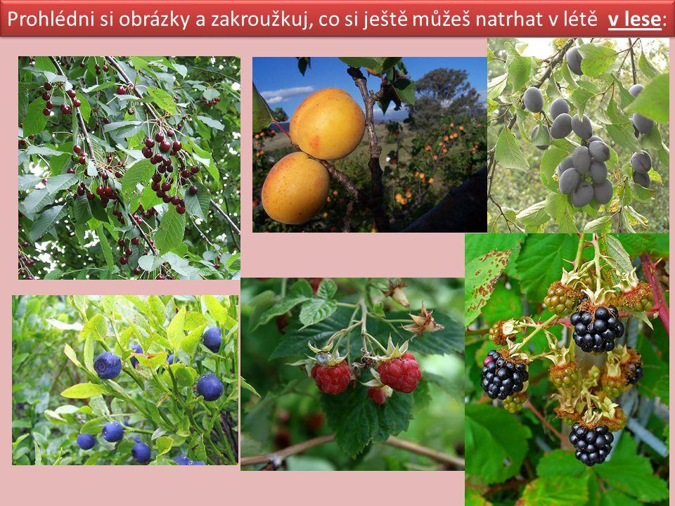 Některé rostliny v lese jsou jedovaté.Mají jedovaté i plody.