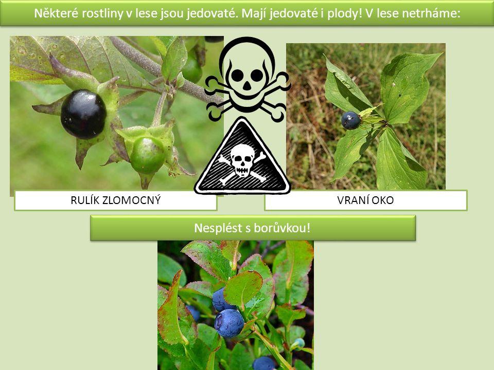 Některé rostliny v lese jsou jedovaté. Mají jedovaté i plody.