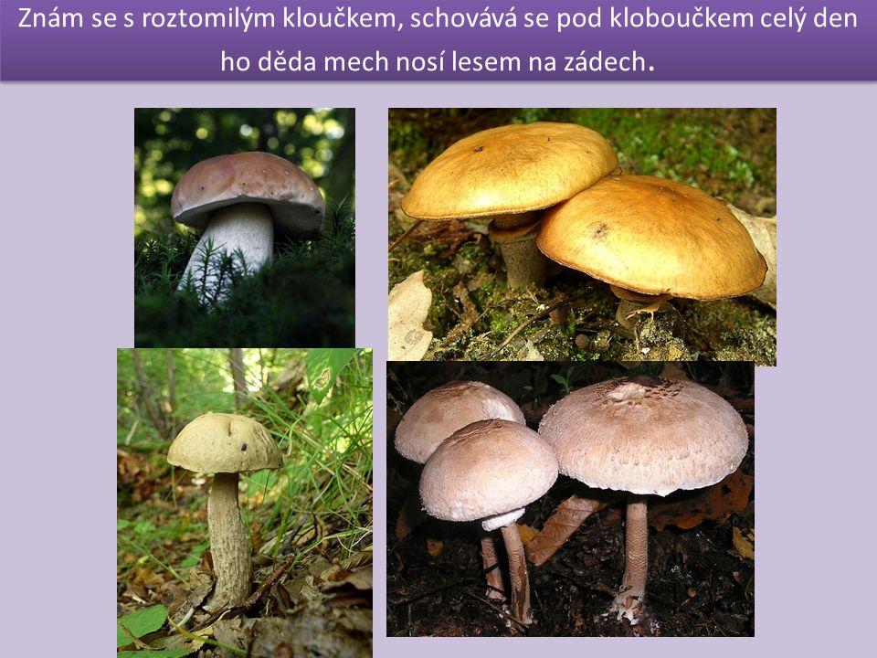 Jsou jedlé i tyto houby?