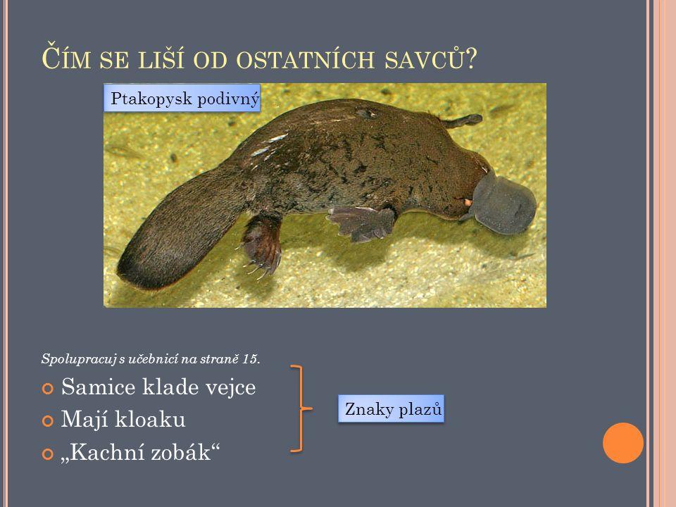 Z DROJ OBRÁZKŮ A FOTOGRAFIÍ File:Platypus.jpg.In: Wikipedia : the free encyclopedia [online].