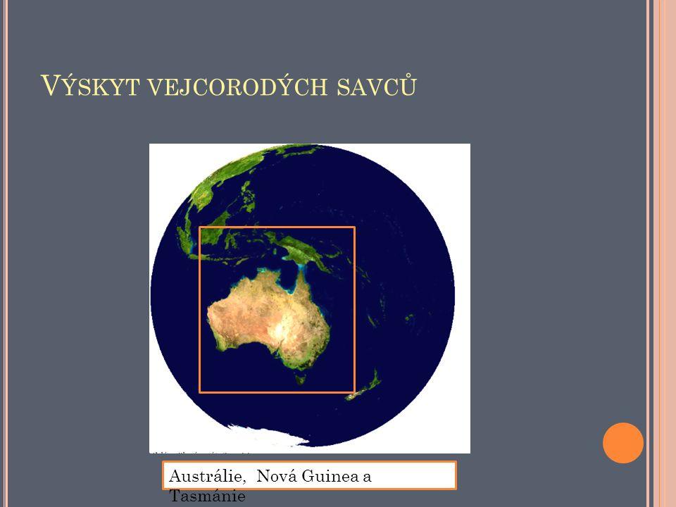 V ÝSKYT VEJCORODÝCH SAVCŮ Austrálie, Nová Guinea a Tasmánie