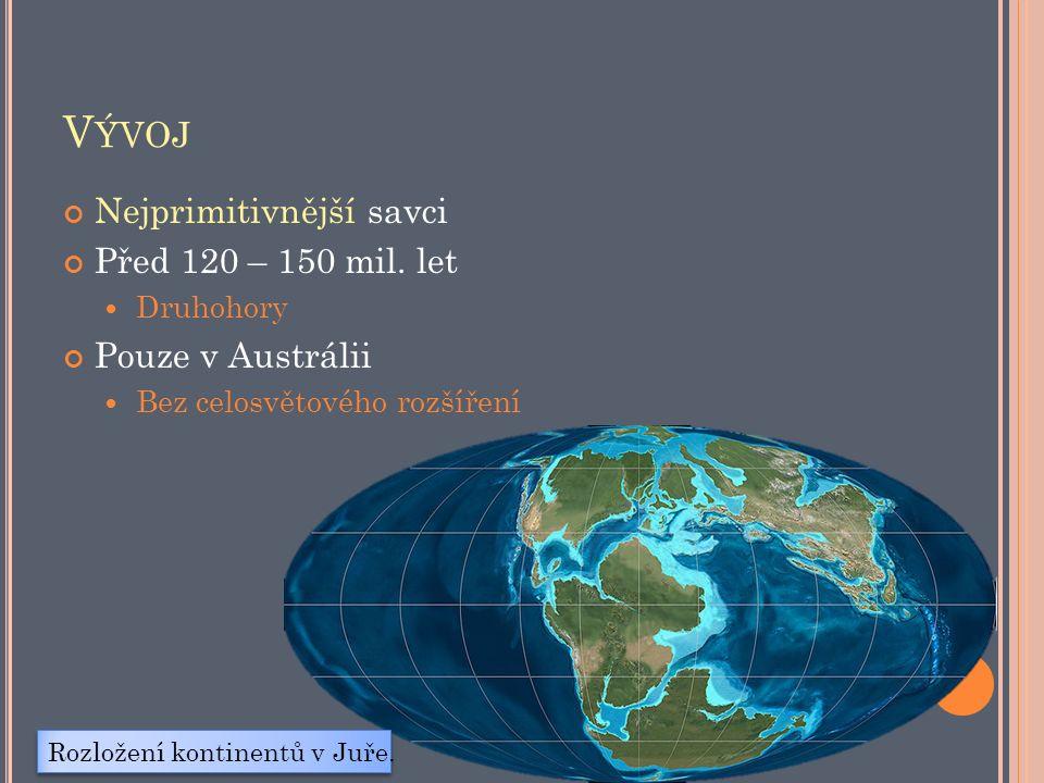 V ÝVOJ Nejprimitivnější savci Před 120 – 150 mil.