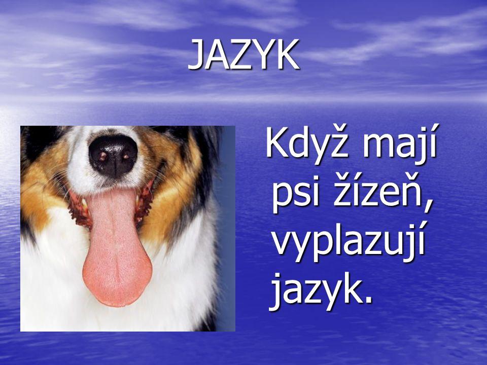 JAZYK Když mají psi žízeň, vyplazují jazyk. Když mají psi žízeň, vyplazují jazyk.