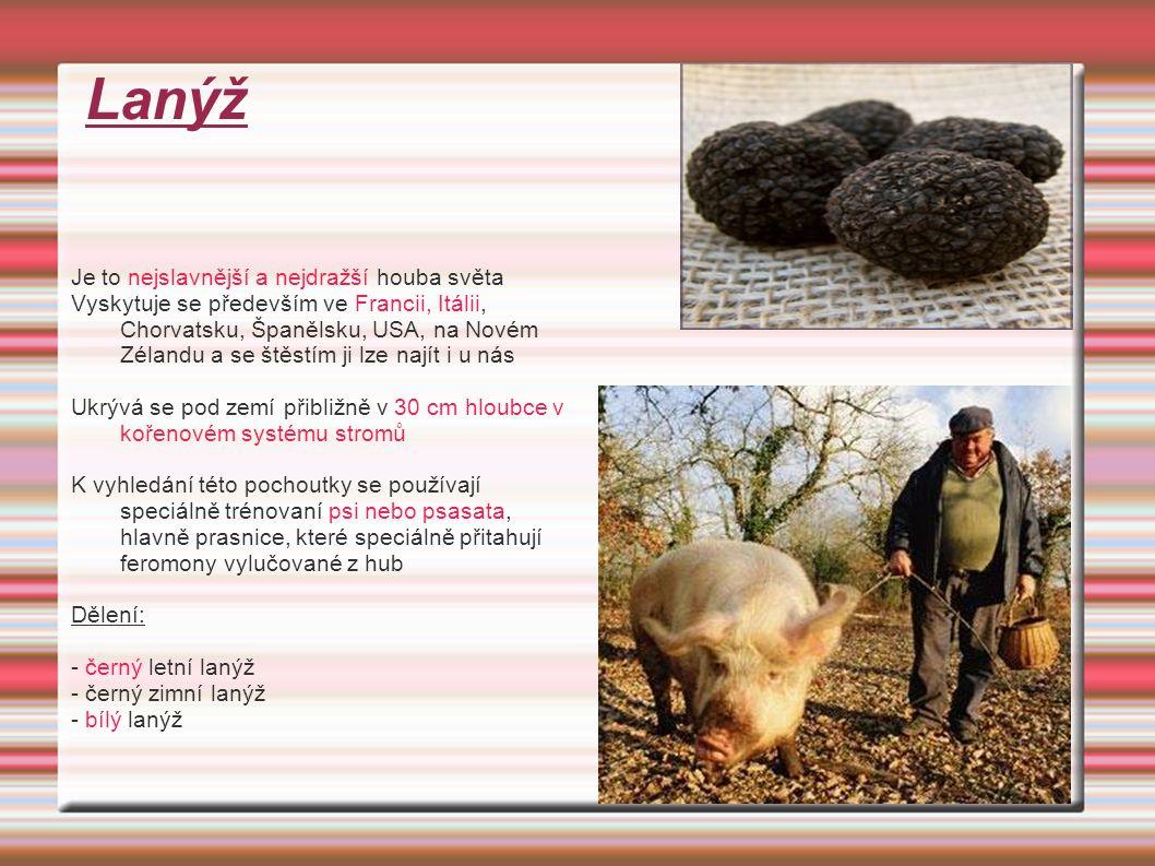 Lanýž Je to nejslavnější a nejdražší houba světa Vyskytuje se především ve Francii, Itálii, Chorvatsku, Španělsku, USA, na Novém Zélandu a se štěstím ji lze najít i u nás Ukrývá se pod zemí přibližně v 30 cm hloubce v kořenovém systému stromů K vyhledání této pochoutky se používají speciálně trénovaní psi nebo psasata, hlavně prasnice, které speciálně přitahují feromony vylučované z hub Dělení: - černý letní lanýž - černý zimní lanýž - bílý lanýž