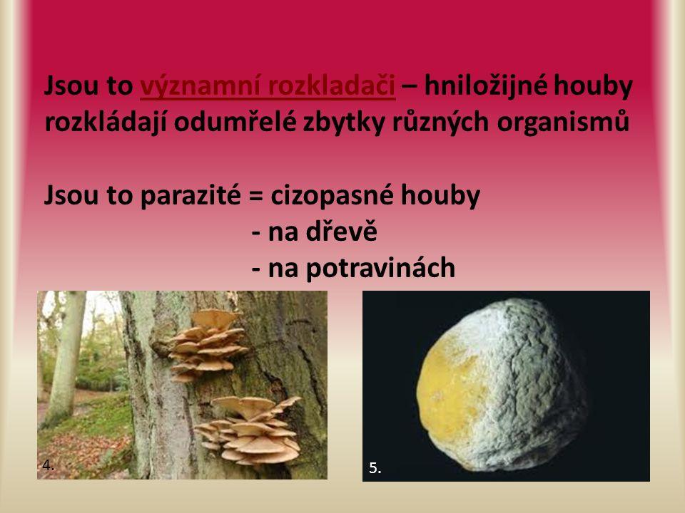 Jsou to významní rozkladači – hniložijné houby rozkládají odumřelé zbytky různých organismů Jsou to parazité = cizopasné houby - na dřevě - na potravinách 4.