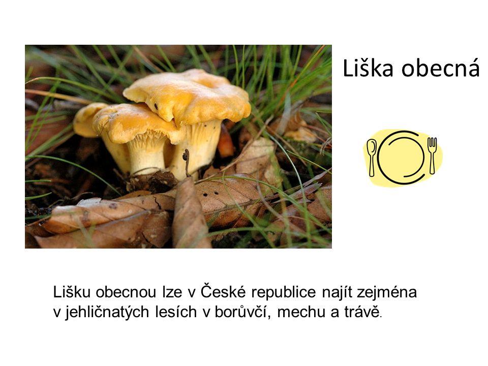 Liška obecná Lišku obecnou lze v České republice najít zejména v jehličnatých lesích v borůvčí, mechu a trávě.
