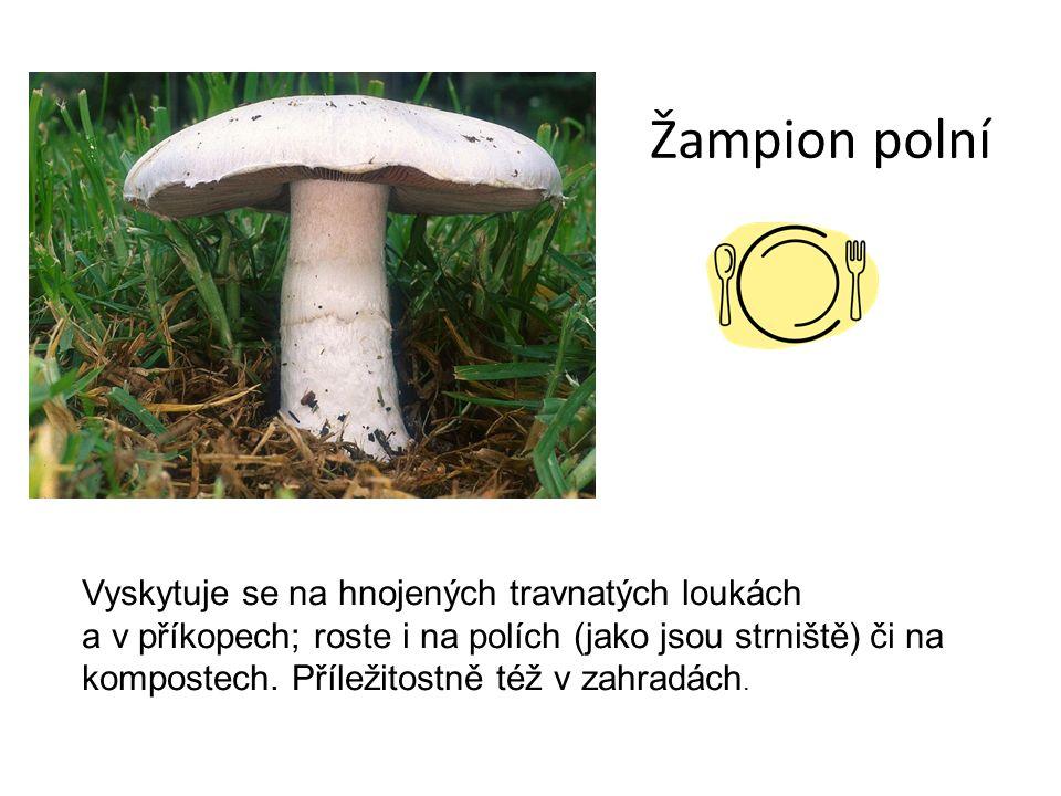 Žampion polní Vyskytuje se na hnojených travnatých loukách a v příkopech; roste i na polích (jako jsou strniště) či na kompostech.