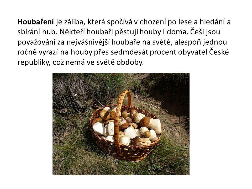 Houbaření je záliba, která spočívá v chození po lese a hledání a sbírání hub.