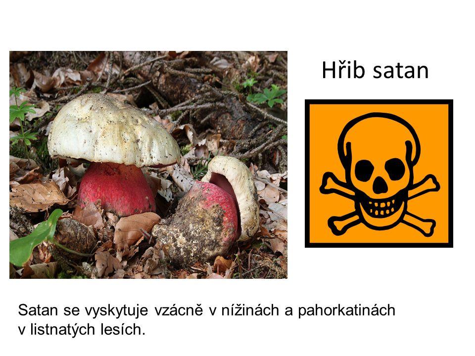 Hřib satan Satan se vyskytuje vzácně v nížinách a pahorkatinách v listnatých lesích.