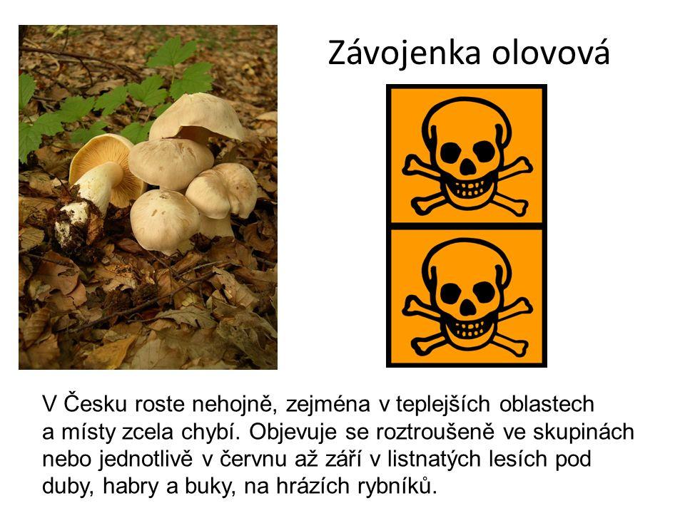 Závojenka olovová V Česku roste nehojně, zejména v teplejších oblastech a místy zcela chybí.